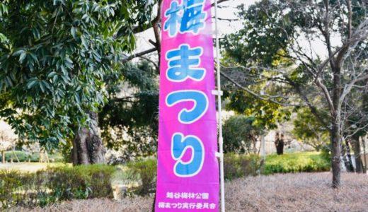 【オシャレブロガーの越谷さんぽ】 2019年 最新、越谷梅林公園の『梅祭り』の様子をお届けします