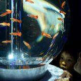 越谷イオンレイクタウンで日本初カフェ型水族館「ジュエリーアクアリウム展」開催